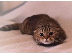 scardy-cat
